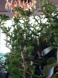 safari planter-succulents-5-pennoyernewman@artefacthome