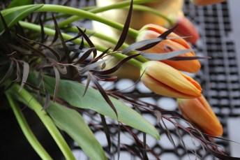 french-tulip-hot-dark-4-artefacthome