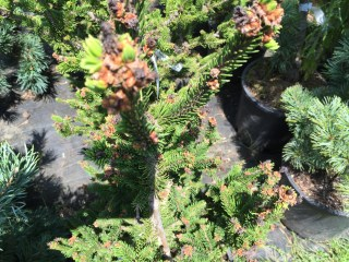 snugharbor-evergreen-3