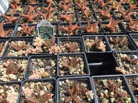 snugharbor-succulents 1