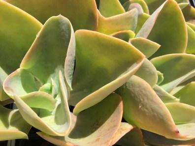 snugharbor-succulents-4