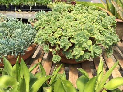 snugharbor-succulents-9