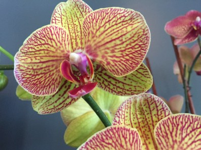 con-orchidbowl2-artefacthome