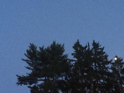 whitehall-inn-maine trees 1