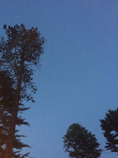 whitehall-inn-maine trees 2