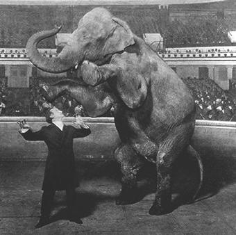 houdini-elephant-photo.jpg