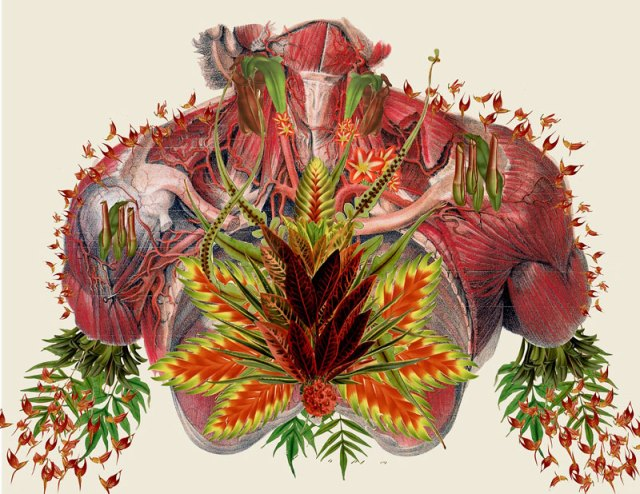 surreal-anatomical-collages-by-travis-bedel-aka-bedelgeuse-5