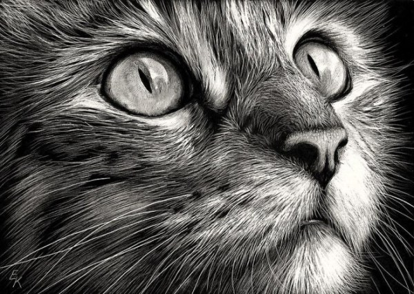 1-cat-drawing-elena.preview