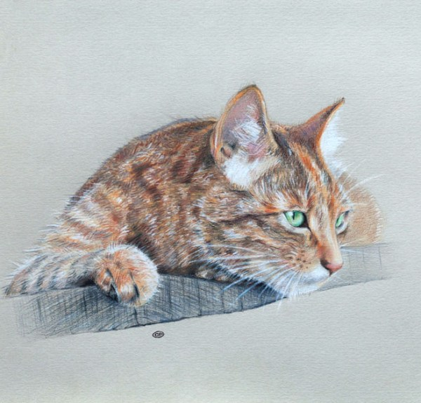 18-cat-color-pencil-drawings