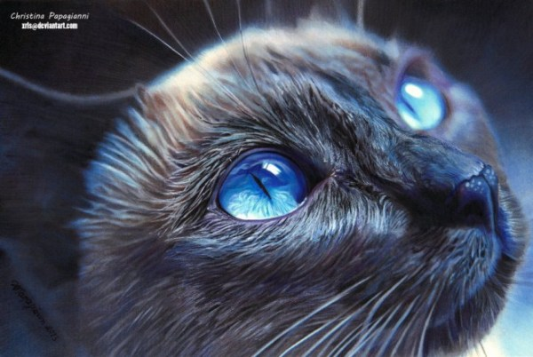 21-cat-hyper-realistic-color-pencil-drawing-by-christina-papagianni.preview