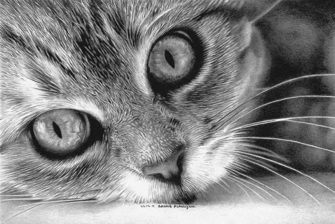 25 Asombrosos Dibujos De Gatos Arte Feed