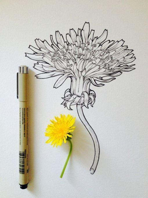 dibujos de flores 4