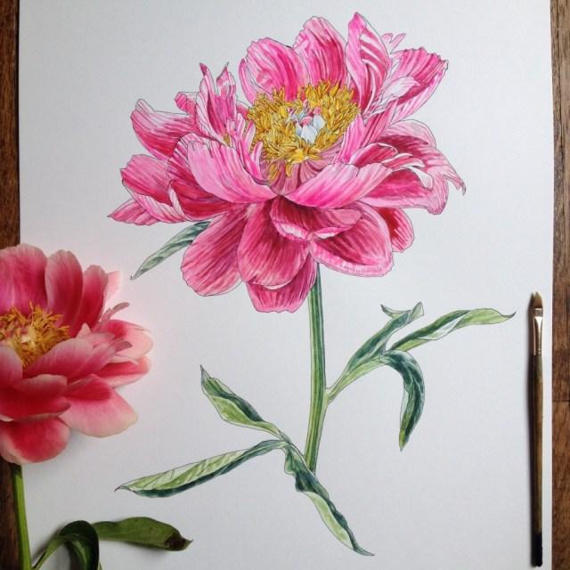 dibujos de rosas 11
