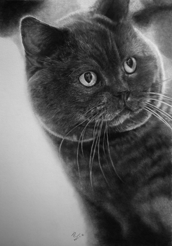paul-lung-cat-drawings-1