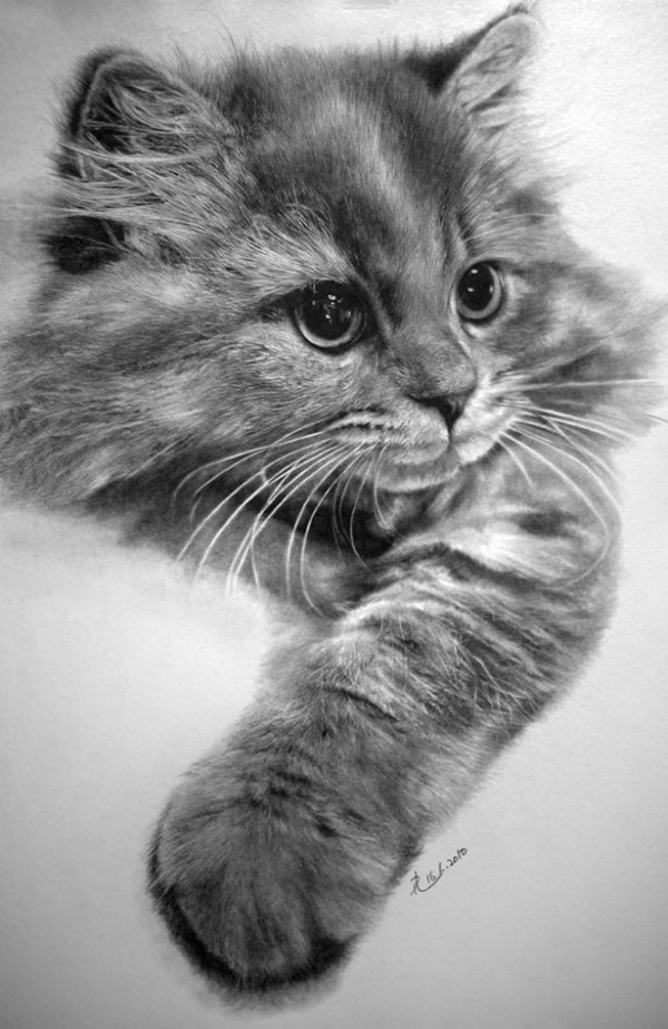 paul-lung-cat-drawings-2