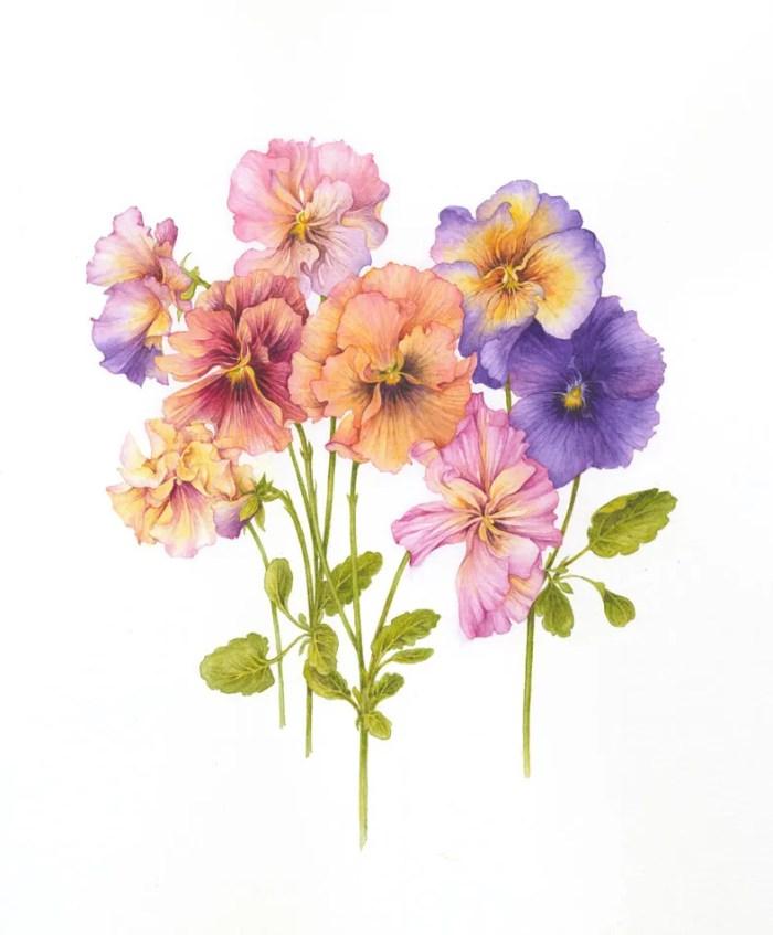 Ilustraciones de flores Jan Harbon 3
