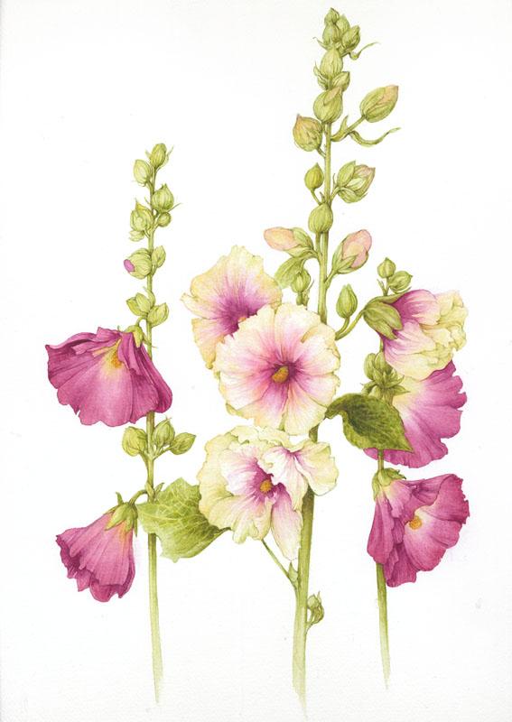 Ilustraciones de flores Jan Harbon 4