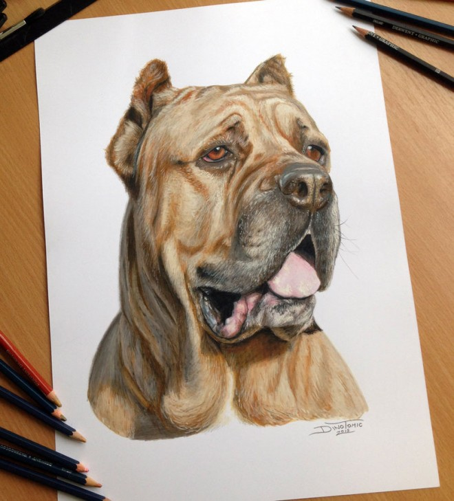 DIbujo perro hiperrealista colores 2
