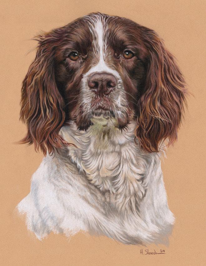 DIbujo perro realistas colores 4