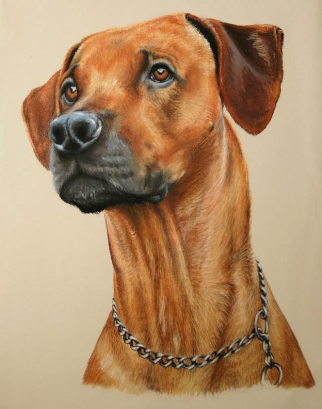 DIbujo perro realistas colores 5