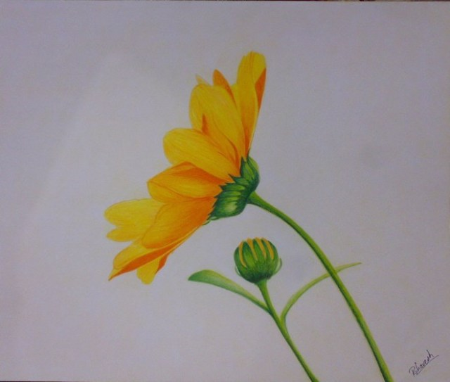 dibujo de flor a color amarillo
