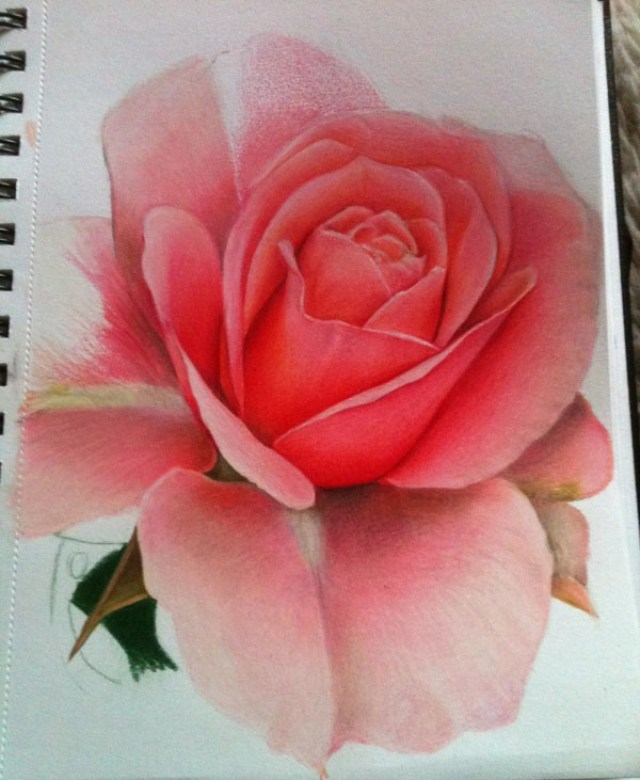 dibujo de flor rosas realista