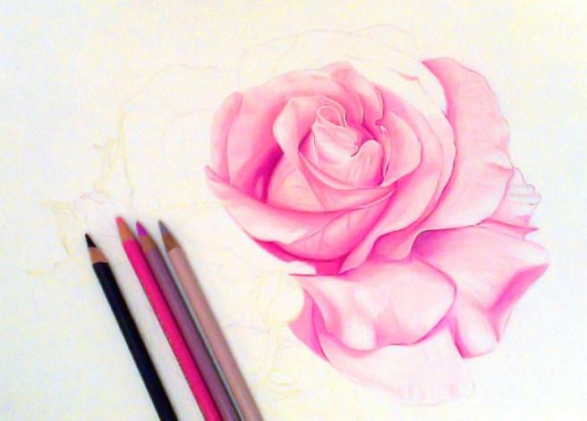 dibujo de rosas realista