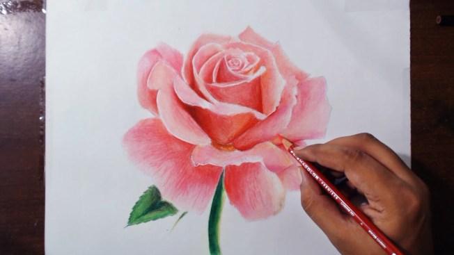 dibujo rosa realista