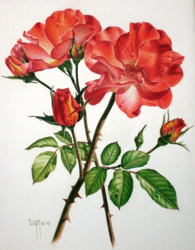 dibujos rosas color