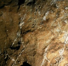 Posible caballo grabado en el conjunto E de Coímbre. © Equipo Norte, Ministerio de Educación y Cultura.