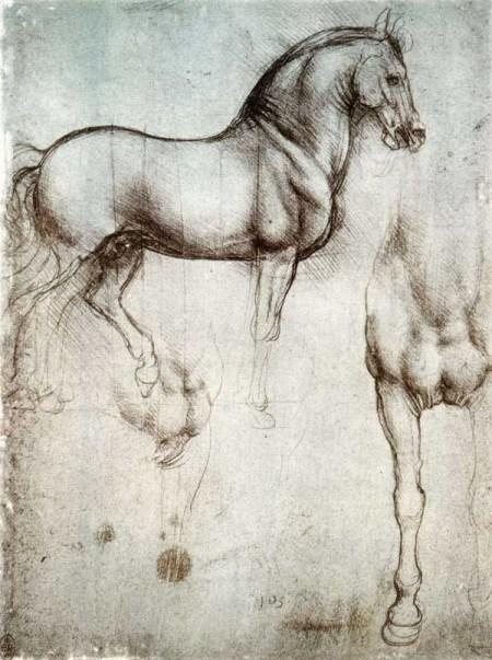 Estudos de um cavalo