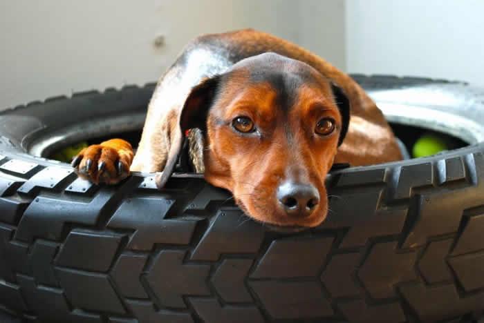 reciclagem-de-pneus-cama-cachoro