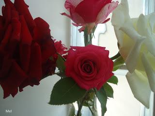 Flores do meu jardim, lindas!