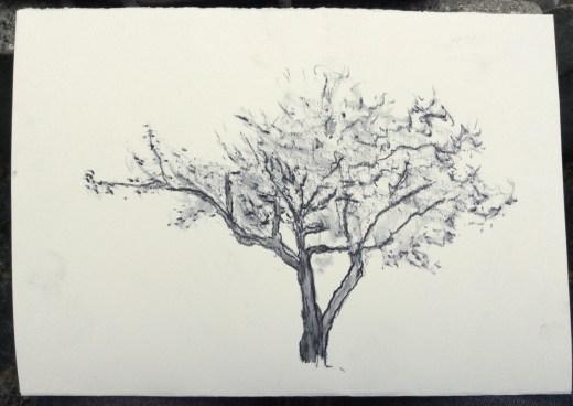 Desenho no Jardim