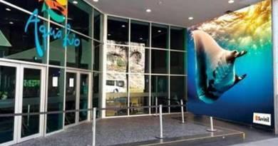 Aquário do Rio de Janeiro recebe mural do Projeto Gigantes do Mar