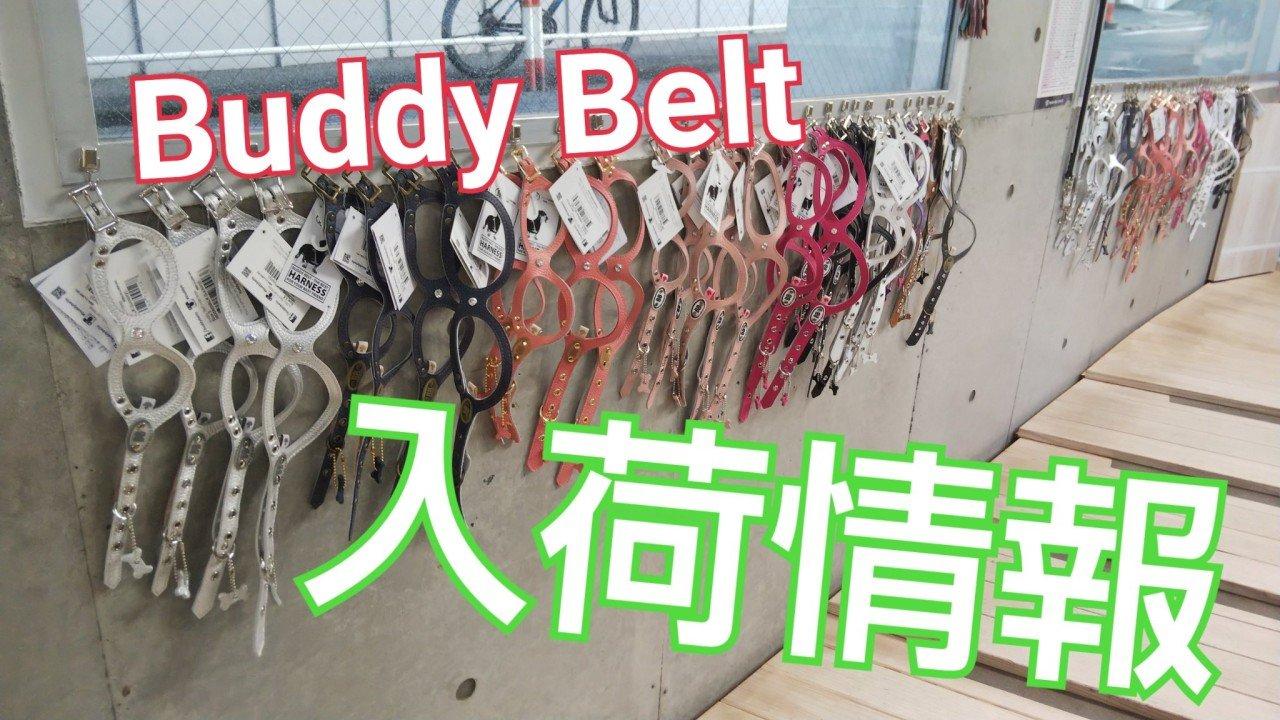Buddy Belt入荷情報