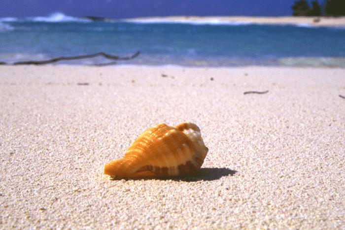 qualita spiaggia conchiglia