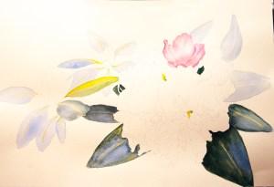 Rhododendron -progression