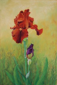Rusty Iris