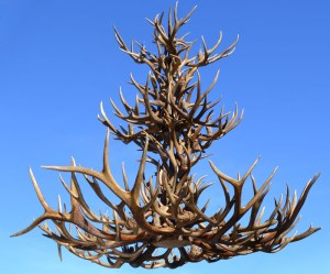 Antler Lighting Natural Antler Chandeliers Lamps And More