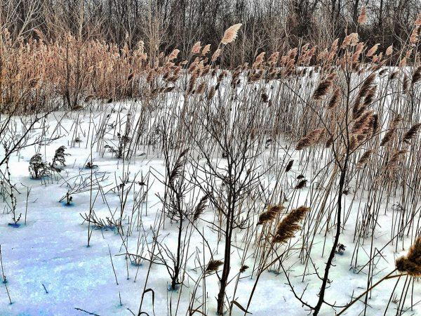 Day 82 – Winter scene -Nikola Petrov