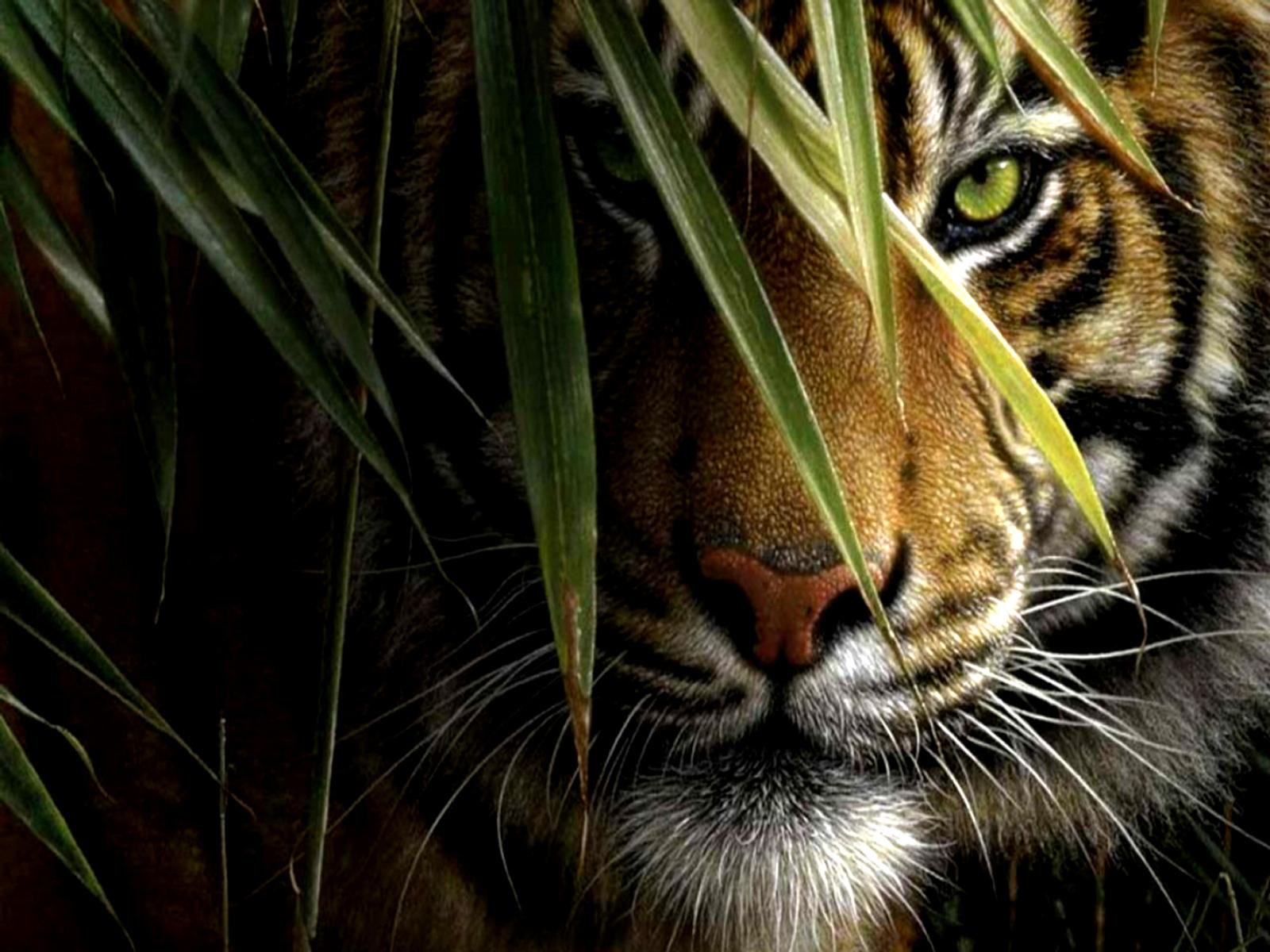 crouching tiger art - id: 28120 - art abyss