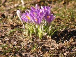 Spring Morning Flowers