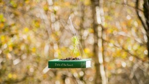 A book with a tree sapling growing out of it, suspended with string.
