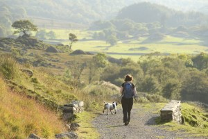 A woman walking in a rural landscape with a dog.