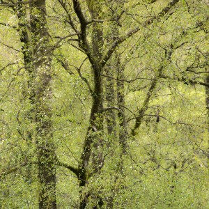 Trees in woodland.
