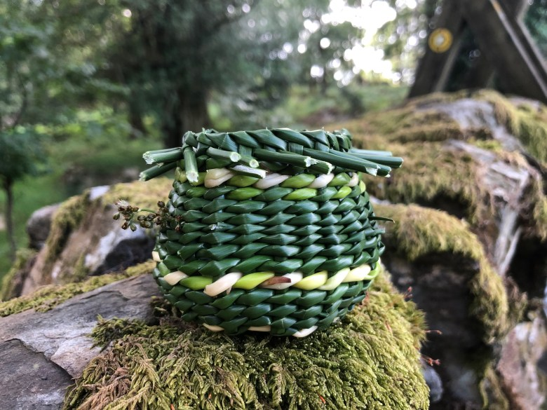 A tiny basket made from fresh rushes picked in the woods in south Cumbria, by Lorna Singleton. This tiny basket is dark green with a line of light green running through it, and is set on top of a mossy stone wall.