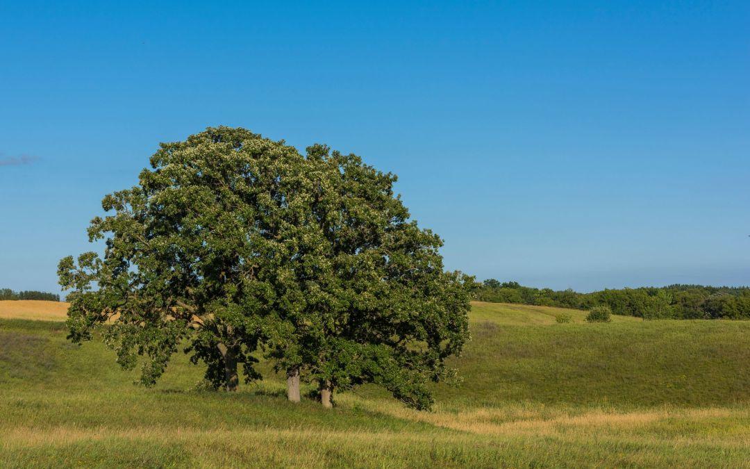 Create Your Dream Sanctuary at White Oaks Savanna