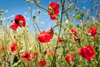 ambient_light_spain_spring_flowers_01