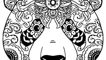Dessin coloriage animaux panda detaille - Coloriage info panda ...